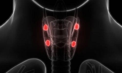Paratiroid Bezinin Yapısı